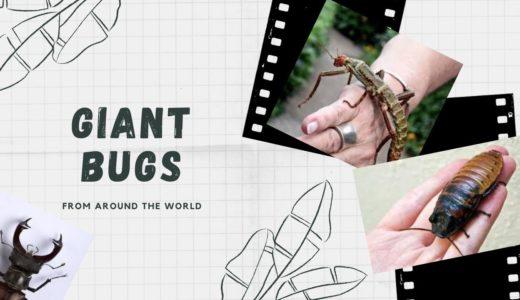 昆虫好き必見!巨大昆虫を子供が触る!英語YouTube動画